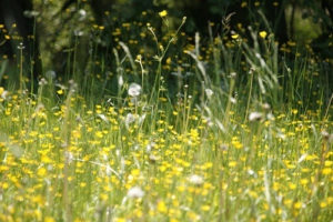 Allergies and A Myriad of Responses To The Natural World